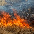 Dry grass burning in the forest, spring day, strong wind - Stock Photo