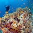 Underwater photographer on a tropical reef — Foto Stock