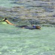 Young child snorkeling in a tropical lagoon — 图库照片