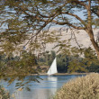 Traditional sailing felluca on the Nile — Foto Stock