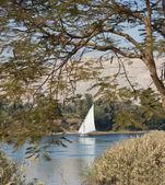 Traditional sailing felluca on the Nile — Stock Photo