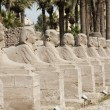 Row of sphinxes at Luxor temple — Stock Photo #8844068