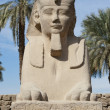 Sphinx at Luxor temple — Stock Photo #8844314