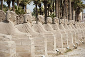 Row of sphinxes at Luxor temple — Stock Photo