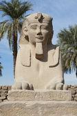 Sphinx at Luxor temple — Stock Photo