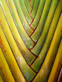 Surface of the palm tree — Stock Photo