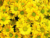Bouquet of yellow flower — Stock Photo