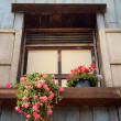 Pink flower in pot on open window — Stock fotografie #9128324