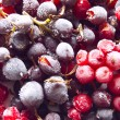 Fresh frozen berries: red and black currant — Stock Photo