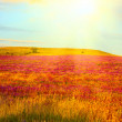 Summer morning. Meadow with wildflowers in warm first sunlights — Stock Photo #9676958