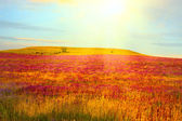 Summer morning. Meadow with wildflowers in warm first sunlights — Foto Stock