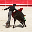 Bullfighting in the nîmes arena — Stock Photo