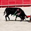 Royalty-Free Stock Photo: Bullfighting in the nîmes arena