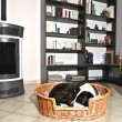 Dog and stove — Stock Photo