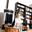 Dog and stove — Stock Photo #9848925