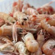 Stock Photo: Scampi in the pot