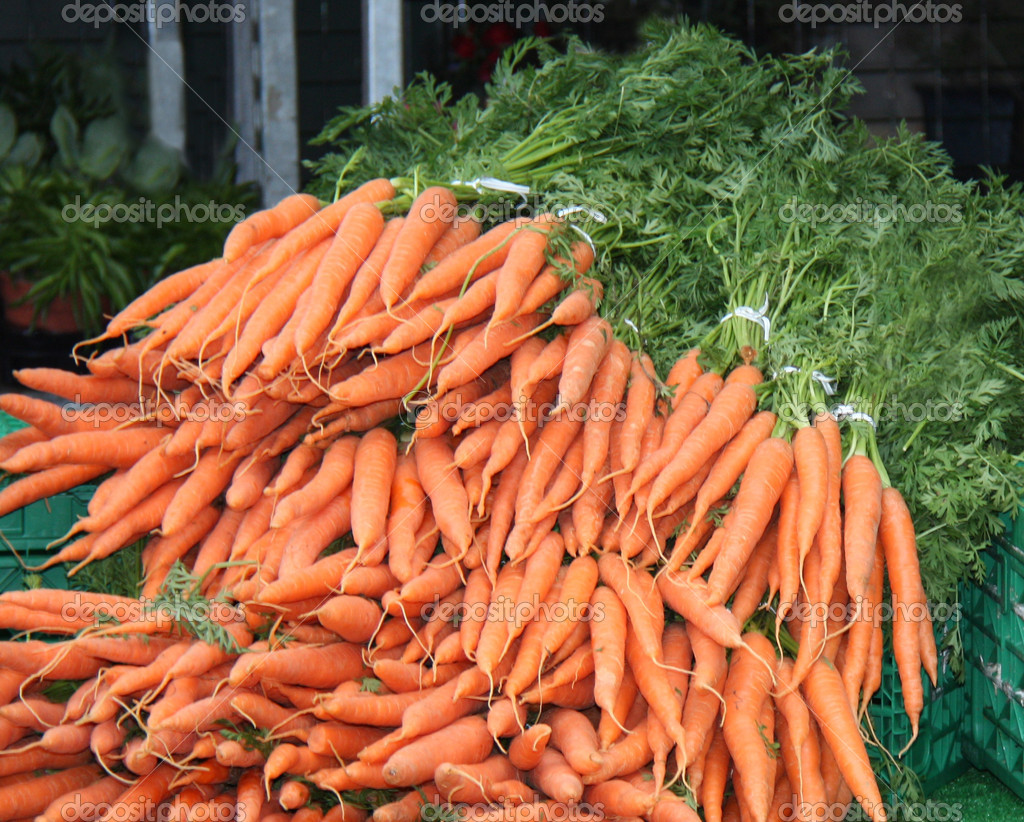 Freshly Picked Carrots Still With Their Green Tops. — Stock Photo #10119723