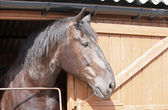великолепного коня. — Стоковое фото