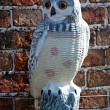 Ornamental Owl. — Stock Photo