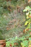 Spider's Cobweb. — 图库照片