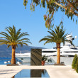 Постер, плакат: Yachts and palms in the port