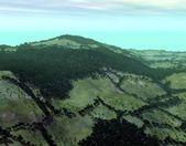 Skogslandskap — Stockfoto