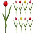 Some tulips — Stock Vector