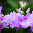 Beautiful orchid — Stock Photo #10194079