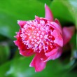 Pink flower with green leaves — Zdjęcie stockowe #10221323