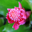 Stockfoto: Pink flower with green leaves