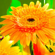 Stock Photo: Beautiful sunny flower