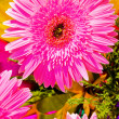 Beautiful pink flowers — Stock Photo