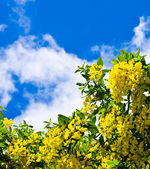 Yellow flowers against the dark blue sky — Stock Photo
