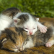 Little Kittens in first outing — Stockfoto