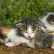 Little Kittens in first outing — Stock Photo