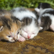 Little Kittens in first outing - Zdjęcie stockowe