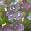 After the Rain — Stock Photo #10536753
