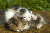 Little Kittens in first outing — Foto Stock
