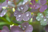 After the Rain — Stock Photo