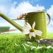 Green watering can with large daisy - Stock Photo