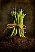 Fresh green beans tied against grunge background — Stock Photo