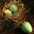 Speckled eggs in nest - Stock Photo