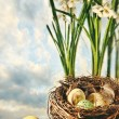 Nest of eggs with flowers for Easter - Stock Photo