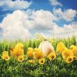 Easter chicks in the grass — Stock Photo #8863508