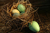 Speckled eggs in nest — Stock Photo