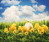 Easter chicks in the grass — Stock Photo