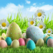 Colorful Easter eggs with daisies — Stock Photo