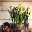 Potted daffodils wirh bulbs for planting - Stock Photo