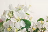 Apple blossoms on soft cream background — Stock Photo