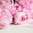 Stock Photo: Pink peony flowers on wood surface